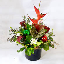 Kiwi Christmas Arrangement