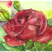 "Card ""Red Rose"""